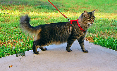 Adjustable Nylon Pet Cat / Rabbit Harness & Leash ~ Collar with Lead ~ 3 Colors