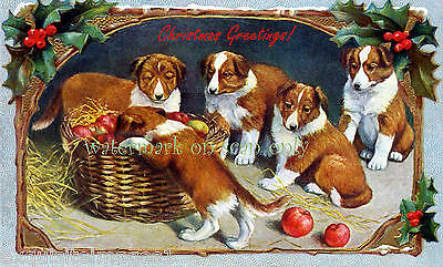 Vintage Art~ Christmas Collie Puppy Dogs with Apples~ NEW Christmas Note Cards