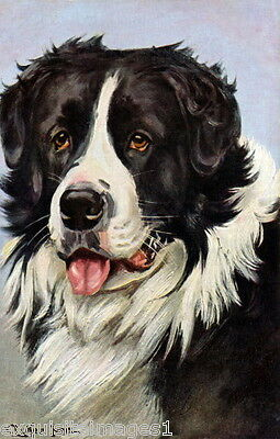 1907 Landseer B & W Newfoundland Puppy Dog Profile~NEW Large Note Cards