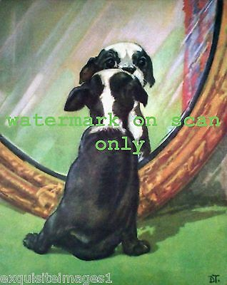 c1930's D.Thorne~ Boston Terrier Puppy Dog Looks in Mirror~NEW Large Note Cards