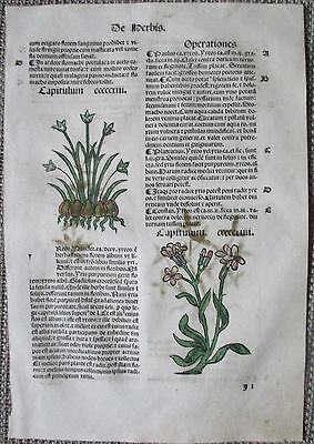 Incunable Leaf Hortus Sanitatis Iris Colored Woodcut Venice - 1500