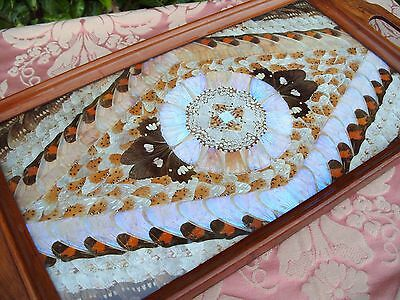 Vintage Butterfly Wing Wooden Tray