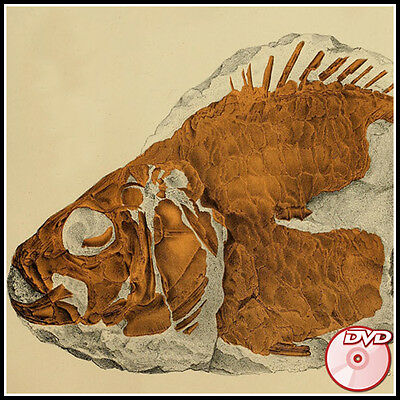 FOSSILS Rare Old Books Collection - Paleontology Fishes Flora Insects  - 3 DVD's