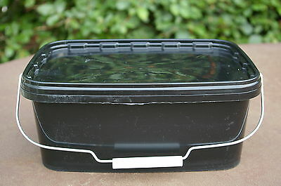 5 x 10litre/2 gallon Rectangular Plastic storage containers/tubs/buckets+lids.