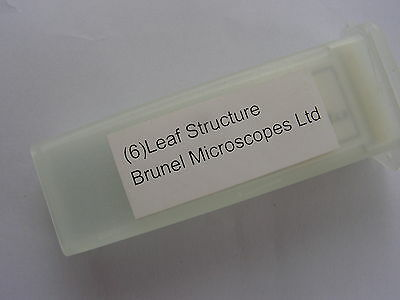 Set of 24 Prepared Microscope Slides housefly parts leaf structure rat histology