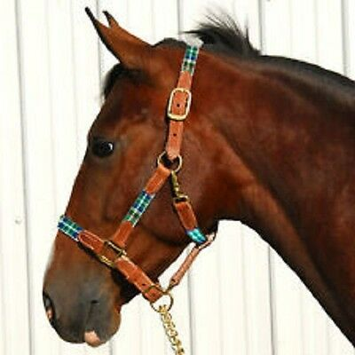 Highland Plaid halter leather and nylon breakaway BRASS hardware HORSE Green