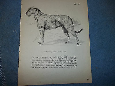 Vintage Gladys Emerson Cook Irish Wolfhound book plate 1945 American Champions""