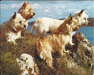 CAIRN RESCUE CHARITY Genuine Brite Mat MOUSE MAT Cairn Terrier Dog