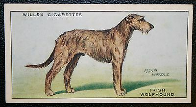 Irish Wolfhound     Original Vintage Illustrated Card  VGC