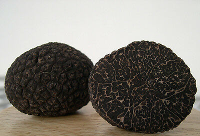 "Fresh Black Winter Truffle GRADE A -""Perigord""- Italian all selected 25 Gr"