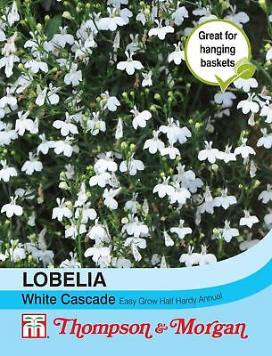 Thompson & Morgan - Flowers - Lobelia (Trailing) White Cascade - 1750 Seed