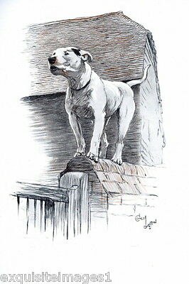 1930 C.Aldin~ PIT BULL TERRIER DOG Sketch Standing on Wall~ NEW Large Note Cards
