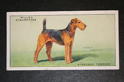 Airedale Terrier   Vintage Coloured Card ## VGC