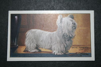 Skye Terrier   1930's Original  Vintage Coloured Card  # VGC
