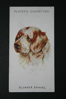 Clumber Spaniel   1920's Original Vintage Picture Card