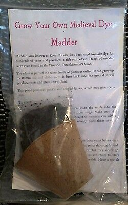 grow your own medieval dye plant - Madder. End of season SALE