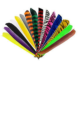 50 x Bearpaw Truthahnfedern barred volle Länge RW turkey feathers full length
