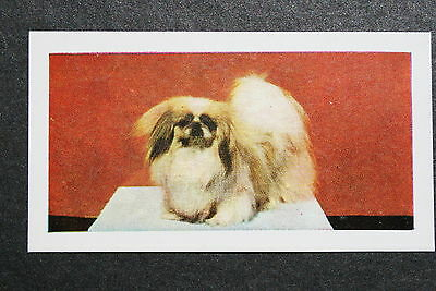 Pekingese       Early 1960's Vintage Photo Card