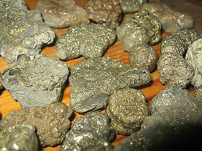 Iron Pyrite Nodules Fossil Charmouth