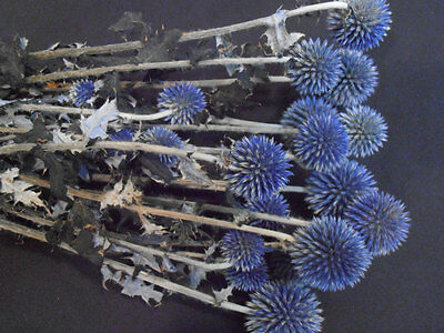 Decorated Natural Dried Blue Green preserved Echinops Nicely wrapped Great !