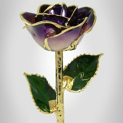 24k Gold Dipped Purple / Cream Real Rose (Free Valentine's Day Gift Box)