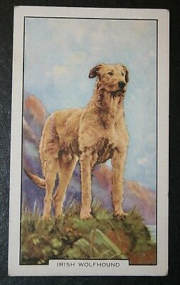 Irish Wolfhound   Original  Vintage Coloured Card # VGC