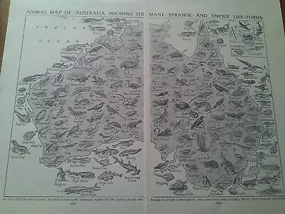 Map of Animals Wildlife Birds of Australia 1924 2 Small Pages Ideal to Frame
