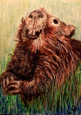 ACEO Original Art  Animal Wildlife Beaver Smiling in the Grass  by LGarcia