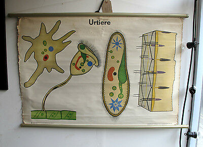 Vintage East German School Poster Scientific Classroom Diagram Volk Und Wissen