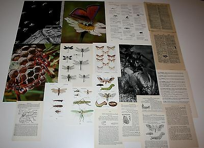 40 vintage insect & dictionary pages - ephemera crafting paper supplies framing