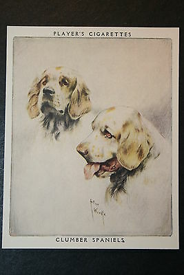 Clumber Spaniel     Large Vintage Twin Portrait Card   EXC