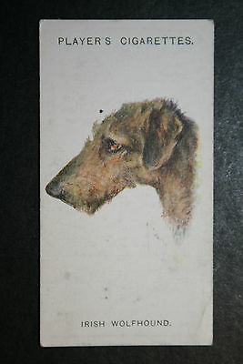 Irish Wolfhound   1920's Vintage Picture Card
