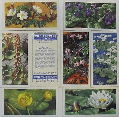 BROOKE BOND *WILD FLOWERS, SERIES 2 (No Issued By)* 1959 8/50 *VG* HV