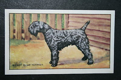 KERRY BLUE TERRIER  Original 1930's Vintage Illustrated Card  VGC