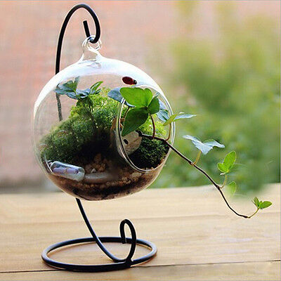 Clear Round Glass Vase Hanging Bottle Terrarium Hydroponic Decor With Holder