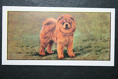CHOW CHOW     Early 1960's Dog Portrait Card  # EXC