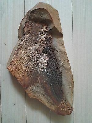 140g Million Year Natural Old fish tail  fossils D23