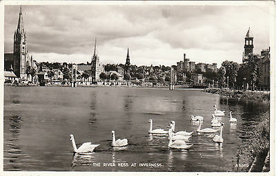 The River Ness & Swans, INVERNESS, Inverness-shire RP