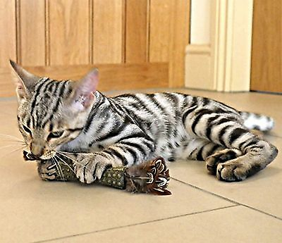 GIGwi Tough Johnny Stick Catnip Cat / Kitten Toy  Feather colour choice  'NEW'