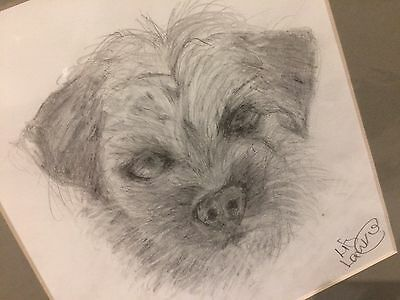 Pencil Drawing Of Border Terrier by Liz Lawrie