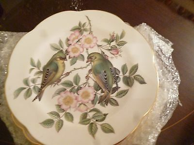 Greenfinch Spode No. 3 plate - Garden Birds - Ligurinus Chloris