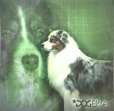Australian Shepherd Magnetic Picture / Coaster  Large 50 mm X 50mm Size