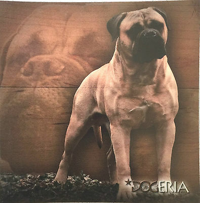 Bullmastiff Magnetic Picture / Coaster  Large 50 mm X 50mm Size