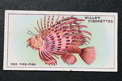 Red Fire Fish   Indian Ocean Tropical Fish  1920's Vintage Illustrated Card