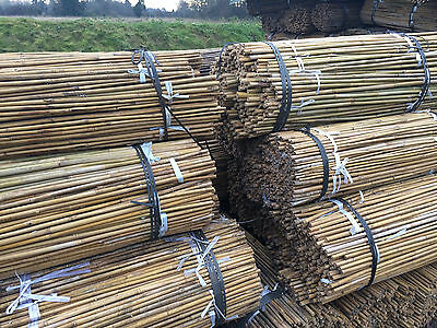 500 X 5FT   BAMBOO CANES 12-14mm GARDEN NEW OLD STOCK CLEARANCE WHILE IT LASTS