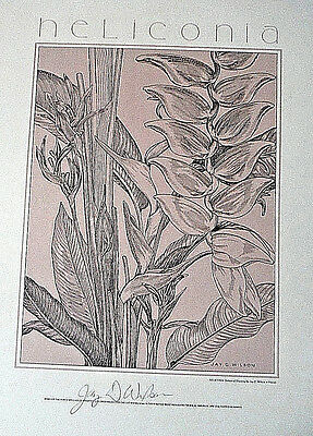 1980s botanical print HELICONIA hand signed Jay Wilson Maui Hawaii tropical vint
