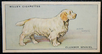 CLUMBER SPANIEL   Original Vintage  Coloured Card  VGC