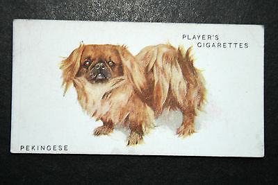 Pekingese  Painting Card  Vintage Early 1930's Original  #   VGC