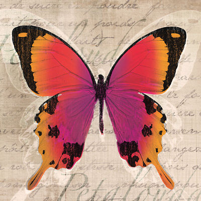 BUTTERFLIES ART PRINT BY TANDI VENTER yellow red orange butterfly 12x12 poster