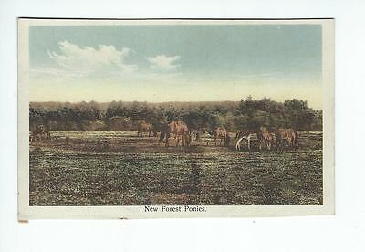 Historical postcard New forest ponies (L2153)
